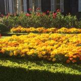 旧古河庭園 秋のバラフェスティバル
