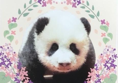 ジャイアントパンダ 香香〜シャンシャン〜