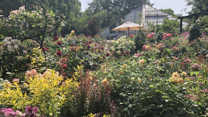 花の香ローズガーデン 光が丘 アイルランドの詩人 トーマス・ムーアの生まれた日 『The Last Rose of Summer』ー夏の名残の薔薇ー