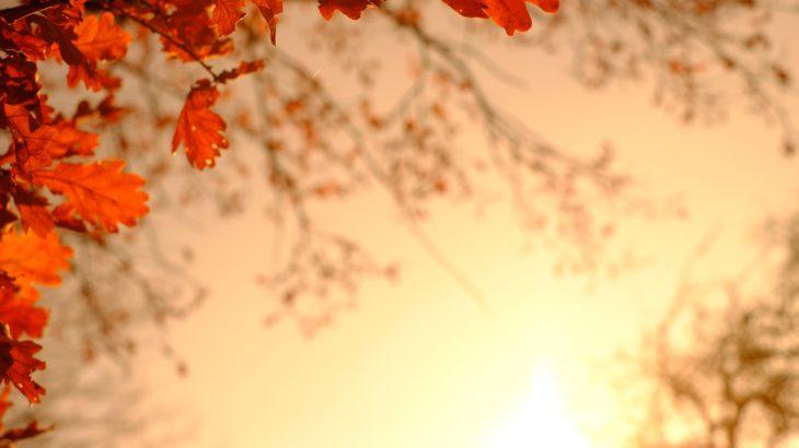 WOWOW presents 勝手に演劇大賞2019 舞台『どろろ』2.5次元部門 作品賞受賞