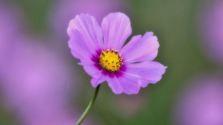 ツイステッドワンダーランド5章リズミック 移動する紫のノーツ 攻略方法